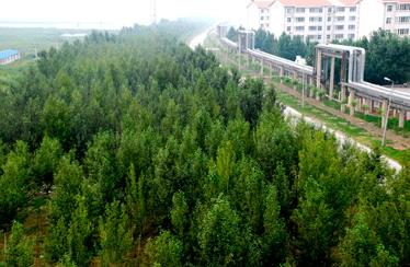 大庆石化生活区防护林图片