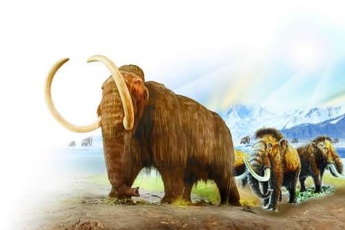第四纪代表动物猛犸象